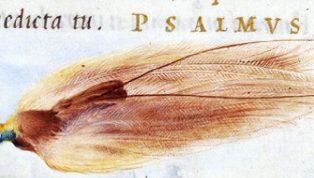 Main---Julije-Klovicin_Bird-of-paradise_1546